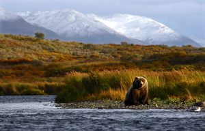 Ways to See Kodiak Island
