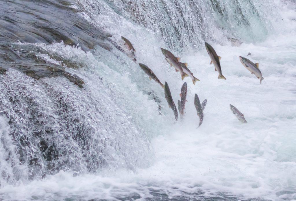 It's Fishing Season In Kodiak!